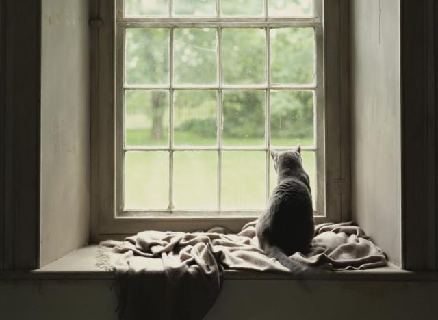 augmenter le prix de vente d 39 une maison gr ce un chat. Black Bedroom Furniture Sets. Home Design Ideas