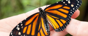 BUTTERFLIES METAMORPHOSIS GPS GUIDE
