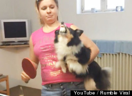 This Spunky Dog Might Be Better At Ping-Pong Than You