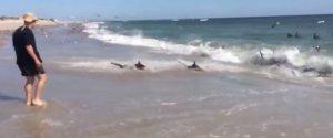 SHARK SWARM BEACH