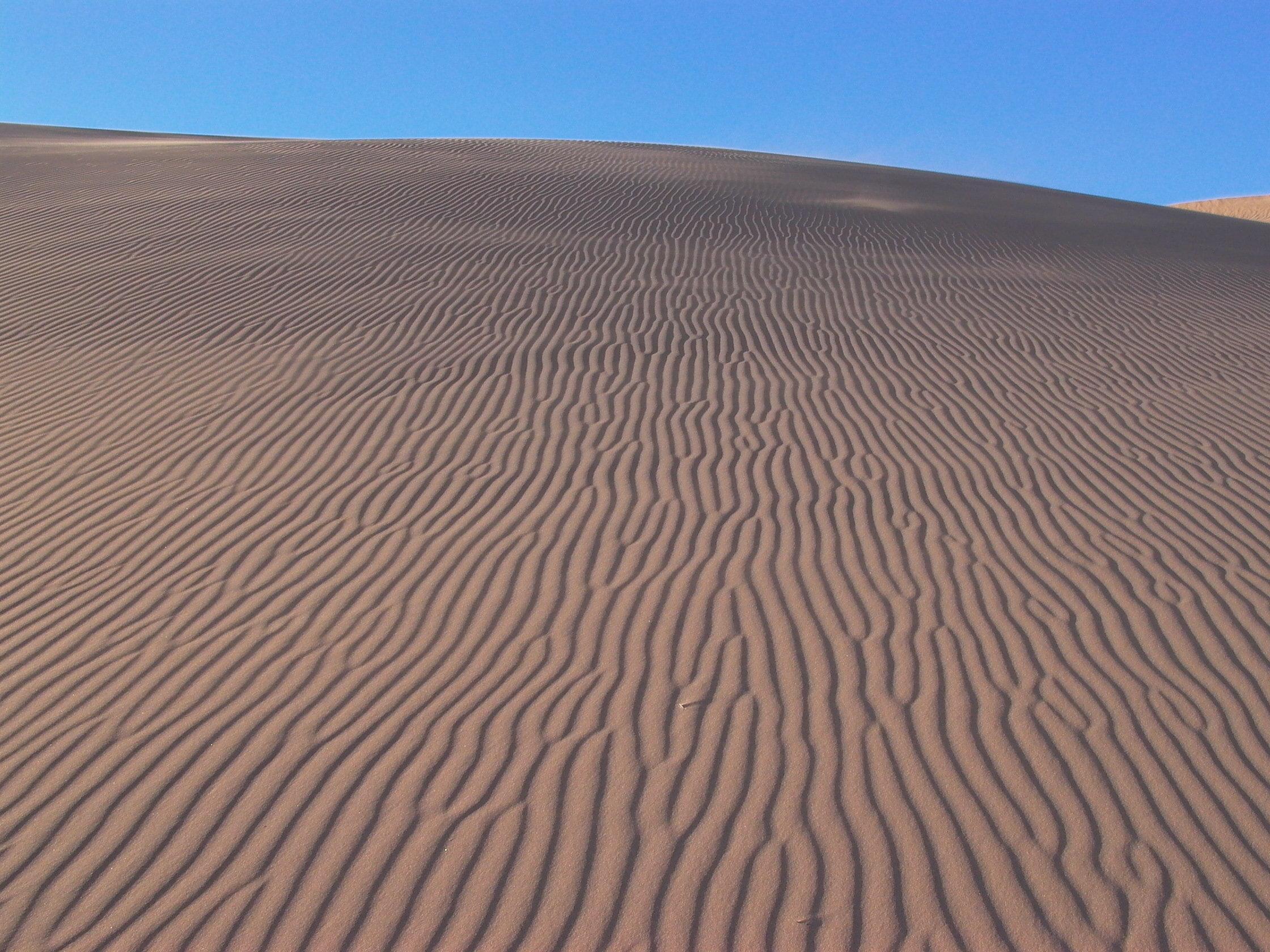 rides sable