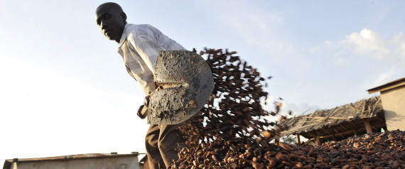 COCOA BEANS IVORY