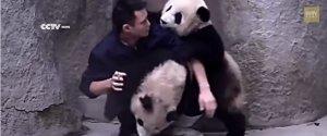 ZOOKEEPER BABY PANDAS MEDICINE