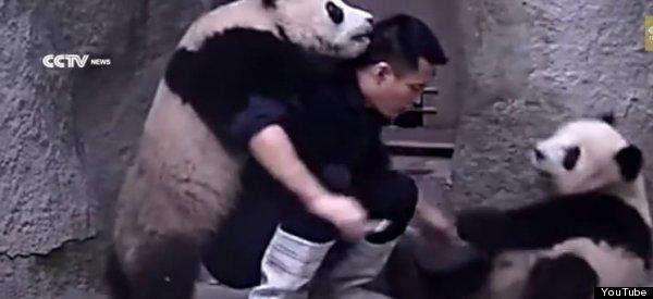 panda medicine