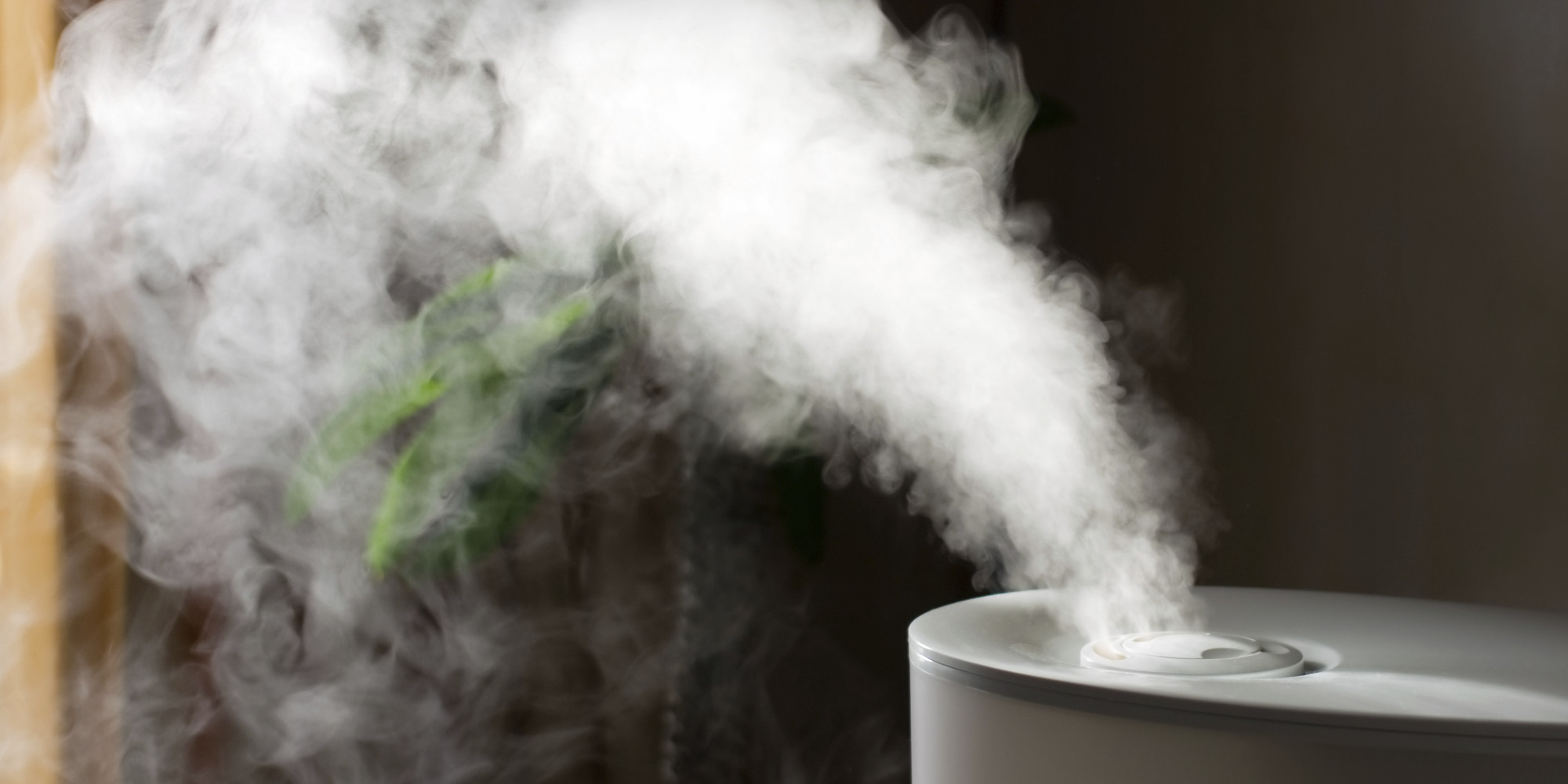 What The Heck Does A Humidifier Do And Why Do I Need One? #826949