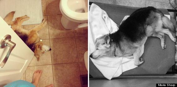 chubby sleeping in bathroom