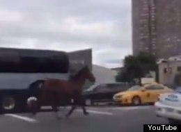 http://i.huffpost.com/gen/2187764/thumbs/s-CARRIAGE-HORSE-large.jpg
