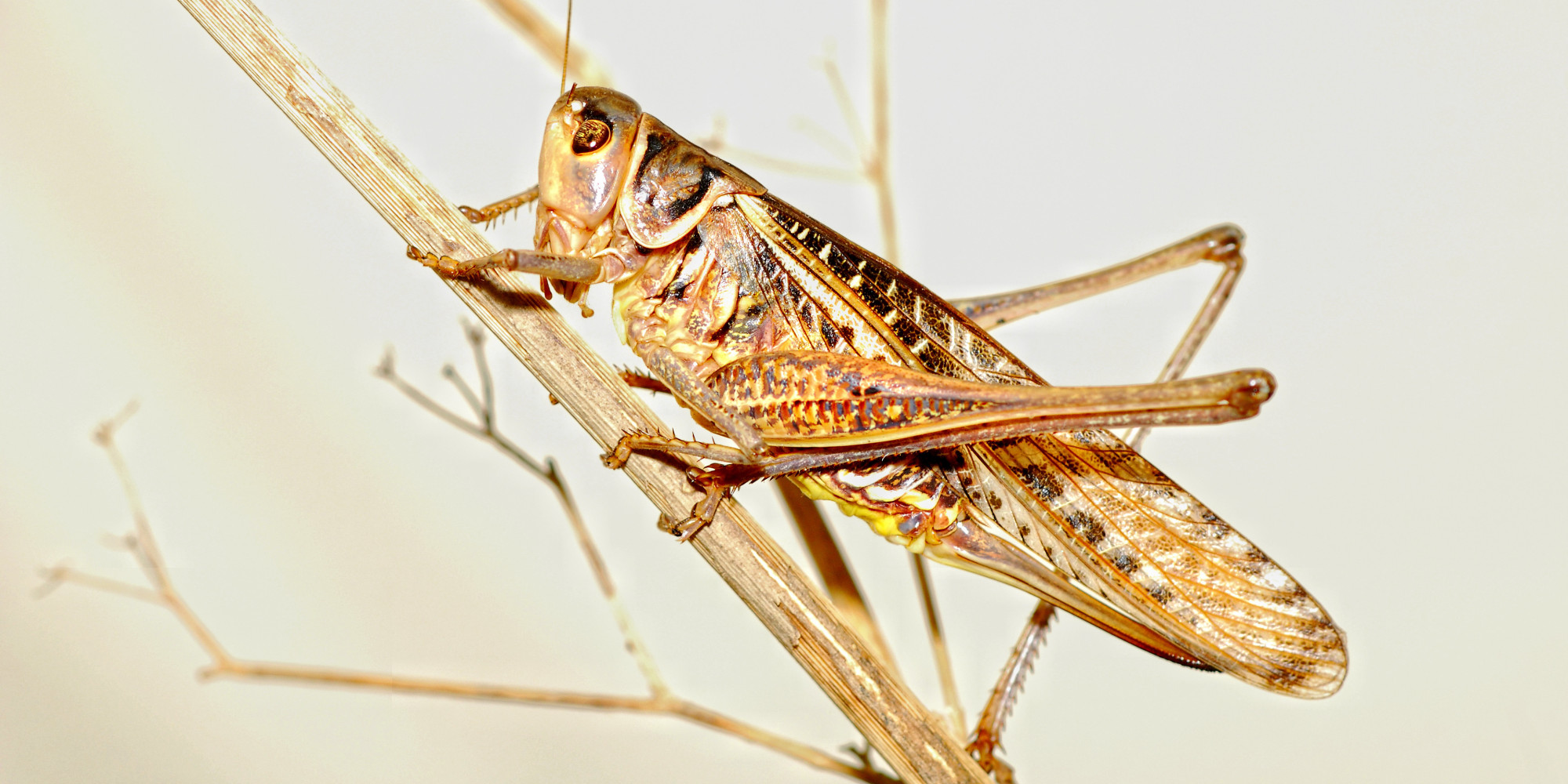 5 ways to eat crickets yes crickets huffpost