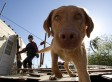 Cops Are Putting More Faith In Cadaver Dogs
