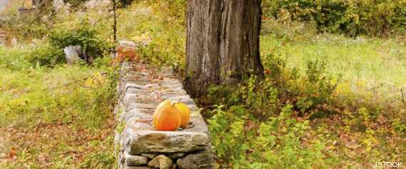 campo halloween
