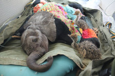 Baby animals found | Pic: David Sheldrick Wildlife Trust
