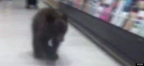 Little Bear Cub Browses Pharmacy (VIDEO)