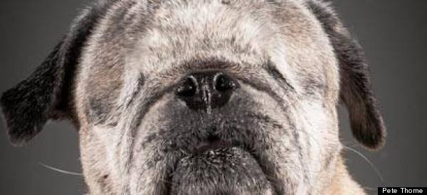 This Mesmerizing Photo Series Captures The Regal Beauty Of Aging Dogs