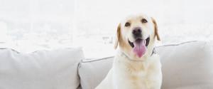 DOG APARTMENT