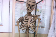 Skeleton | Pic: CEN