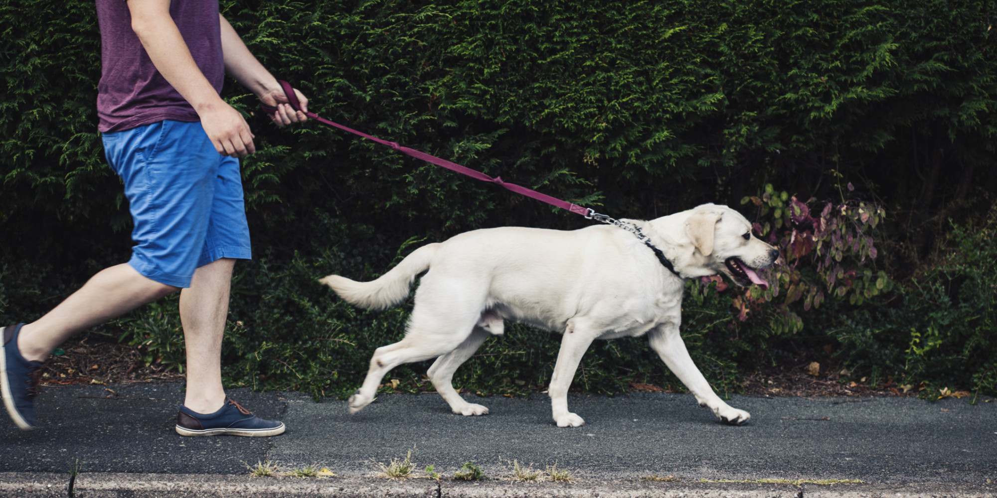 New York Times Dog Walking Exercise