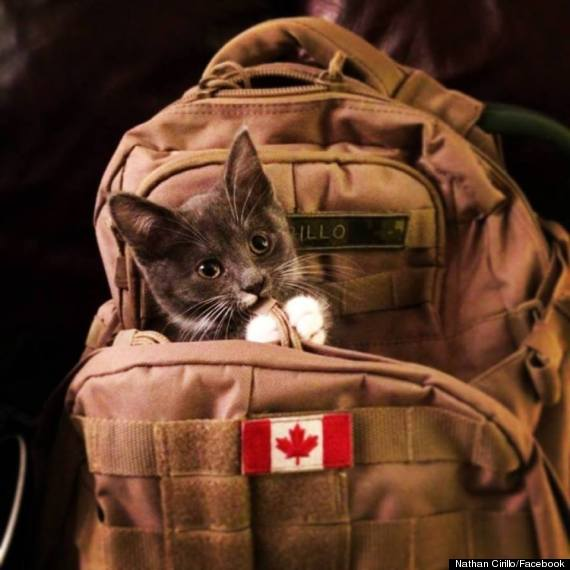 nathan cirillo cat