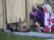 Dogs Of Soldier Shot Dead In Ottawa Pine For A Master Who Will Never Return