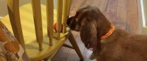 SPANIEL DOG BALL CHAIR