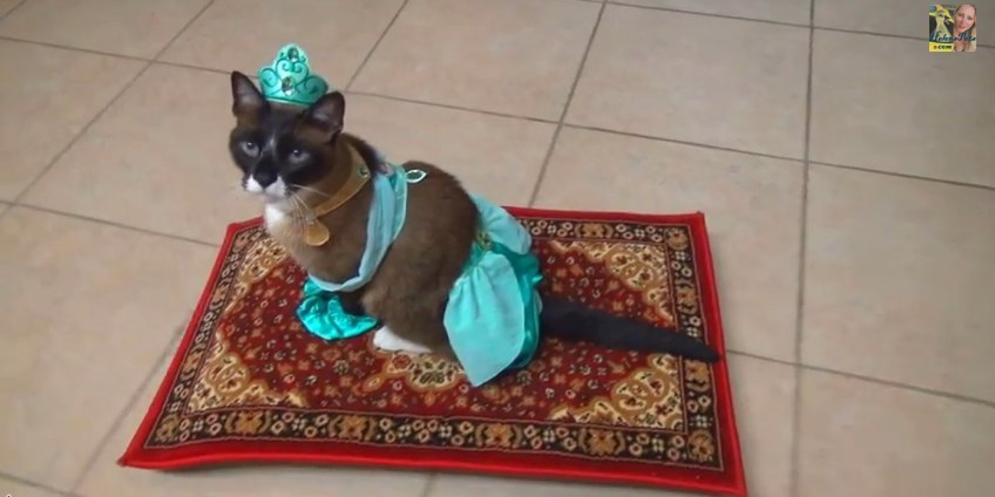 Roomba Shark Cat Gets Into The Halloween Spirit By