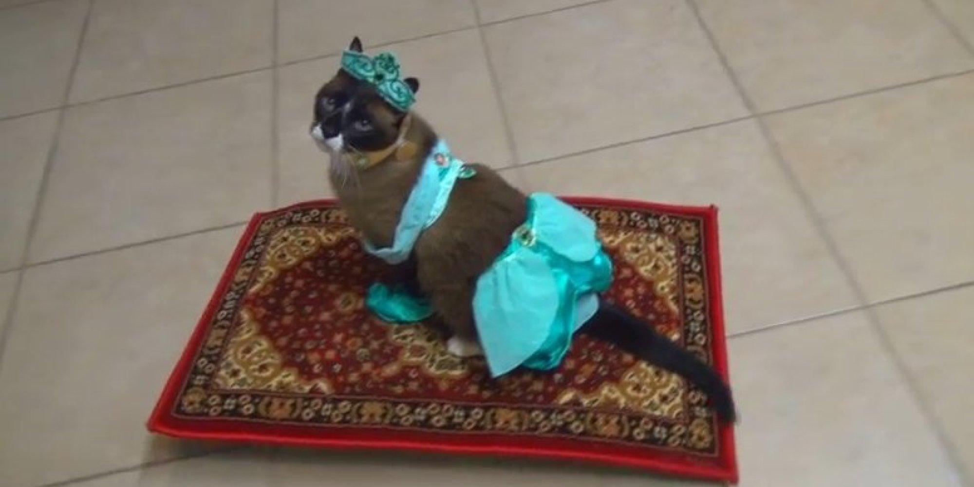 Will cat pee on new carpet