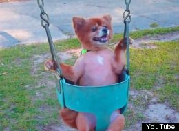 Here's A Bunch Of Dogs Swinging On Swings Like Humans. You're Welcome.
