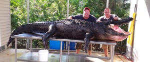BIG ASS GATOR