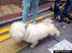 puppy proxy