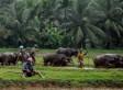 Over 300 Missing After Landslide Buries Village In Sri Lanka