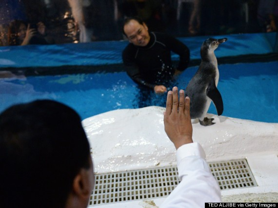 blessing penguin