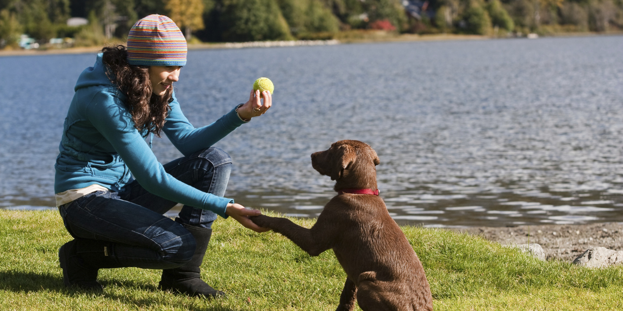 Puppyproof Your Holiday Season Tips For Training Your
