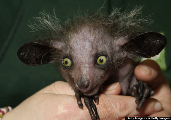 Scary Animals That Are Real 11 Of The Scari...