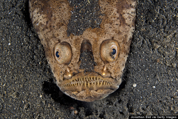 11 Of The Scariest Looking Creatures In The Animal Kingdom ...