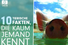 Tierwissen | Bild: Bild