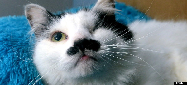 Cat Who Looks Like Hitler Survives Brutal Beating