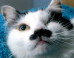 Cat Who Looks Like Hitler Survives Brutal Beating