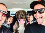This Is What A Perfect Dog Adoption Looks Like