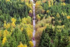 Herbstlicher Schwarzwald | Bild: PA