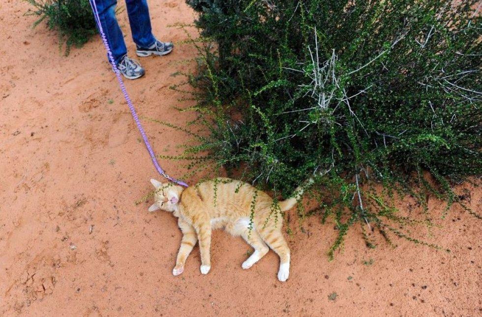 cat hiking
