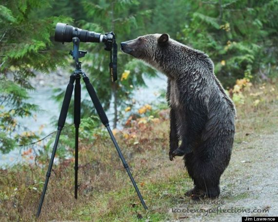 grizzly bear photographer