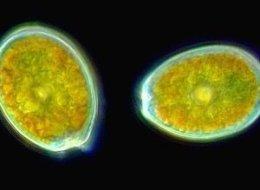 nasa found alien bacteria by - photo #27