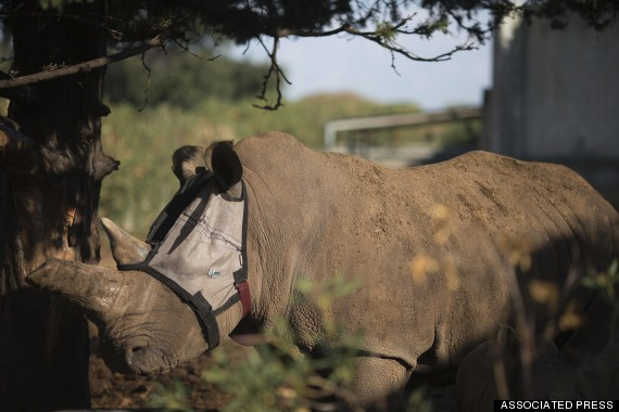 tanda rhino