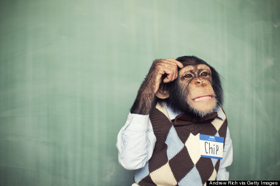 animal thinking vintage