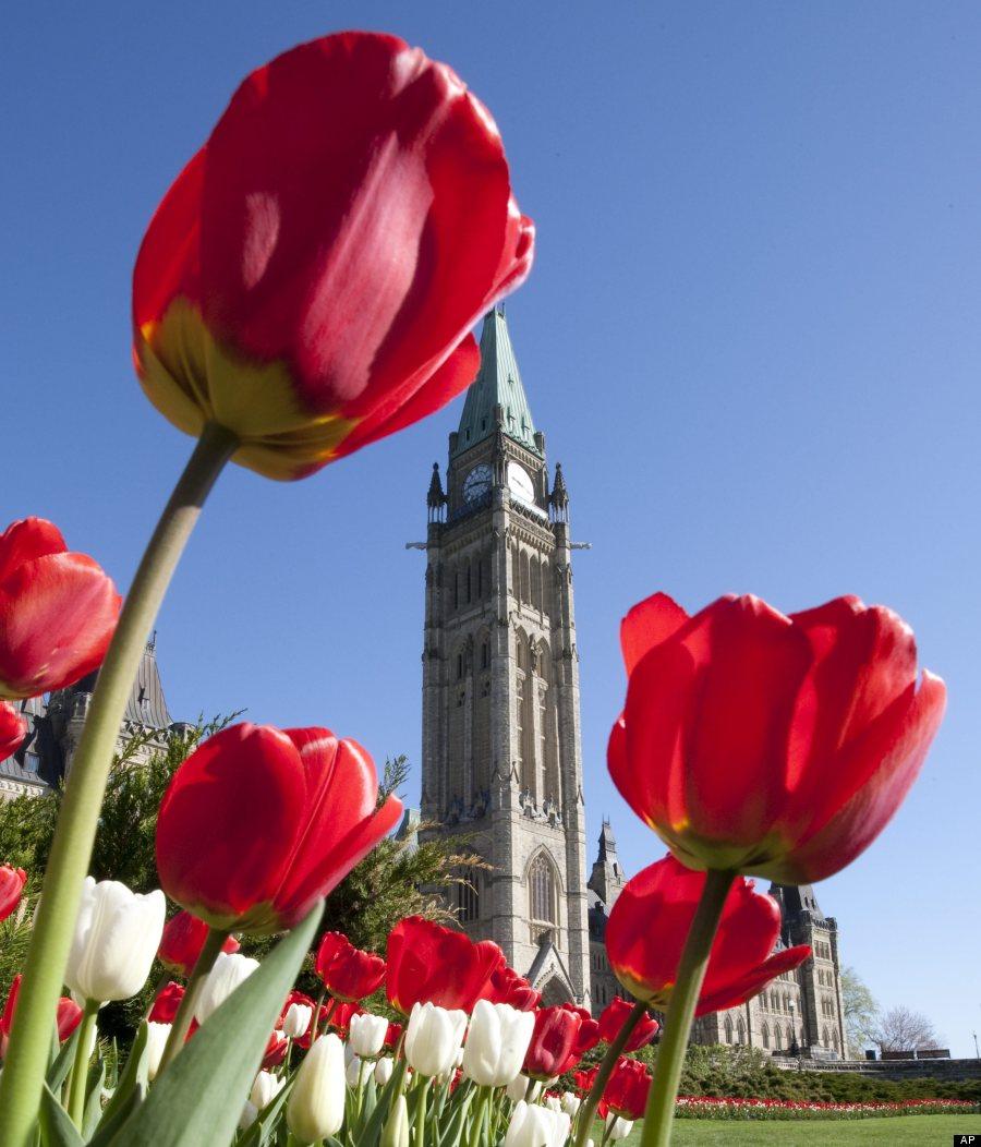 parliament tulips ottawa