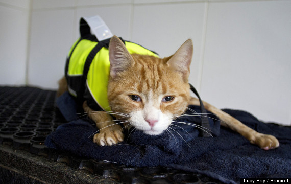 cat hydrotherapy
