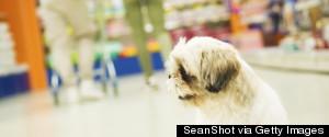 DOG IN A SHOPPING CART