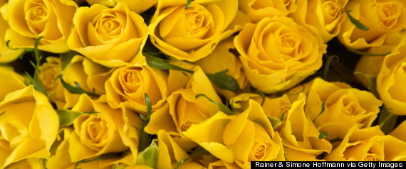 yellow roses1110