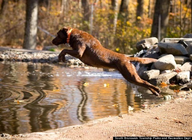 rocky top dog park