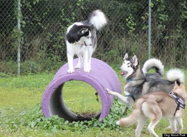 TrickedOut Dog Parks That Will Make Your Pup Go Wild HuffPost - Purpose built canine pool every dogs dream