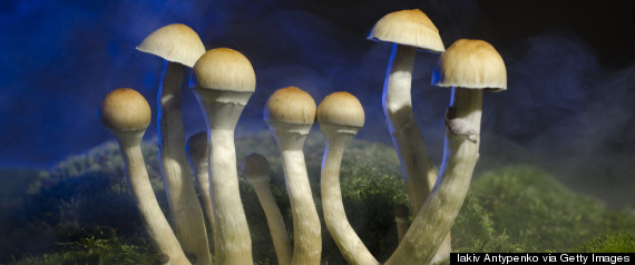 What We Really Know About Psychedelic Mushrooms | HuffPost